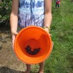 Aris-bucket
