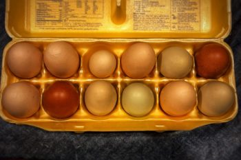 rainbow-colored eggs in a carton